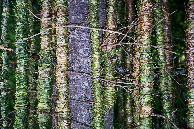 vivoverde-erba-8