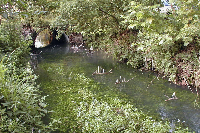 vivoverde-pesci-5